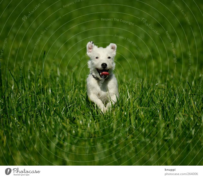 Frostie IV Natur Sonne Sonnenlicht Sommer Schönes Wetter Pflanze Gras Wiese Feld Tier Haustier Hund Tiergesicht 1 Tierjunges laufen springen Gesundheit frech