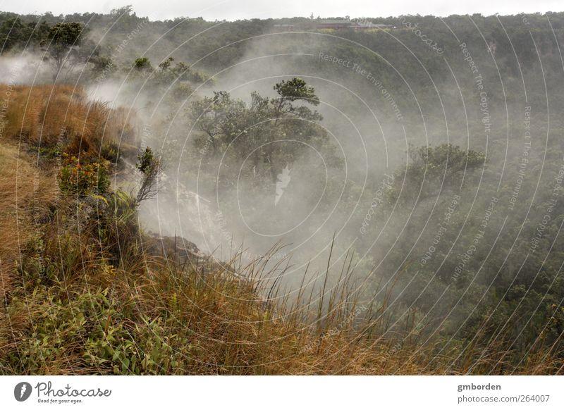 Aufsteigender Nebel Umwelt Natur Landschaft Pflanze Urelemente Erde Luft Wassertropfen Sommer Klima Wetter Schönes Wetter Baum Gras Sträucher Wildpflanze Urwald