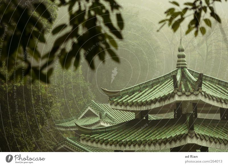 aussichtslos Natur Baum Pflanze Herbst Architektur Stimmung Park Regen Nebel Sträucher Dach Hügel Bauwerk Skyline China Sehenswürdigkeit