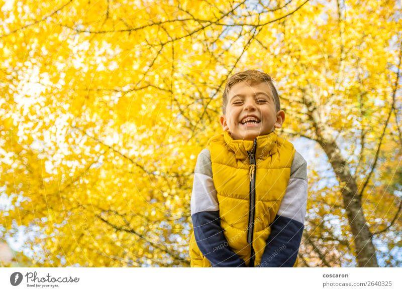 Süßes Kind gegen einen gelben Baum im Herbst Lifestyle Freude Glück schön Freizeit & Hobby Freiheit Mensch Baby Kleinkind Junge Mann Erwachsene Kindheit 1