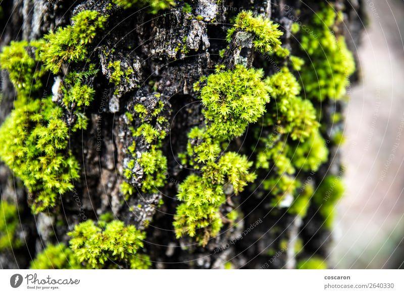 Nahaufnahme eines Mooses in einem Stamm Design schön Leben Sommer Tapete Umwelt Natur Pflanze Baum Blume Gras Blatt Wald alt Wachstum frisch nass natürlich wild