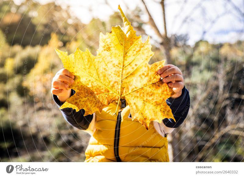 Kleines Kind mit großem Blatt im Herbst Lifestyle Freude Glück schön Gesicht Spielen Mensch Baby Kleinkind Kindheit 1 3-8 Jahre Natur Pflanze Winter Grünpflanze