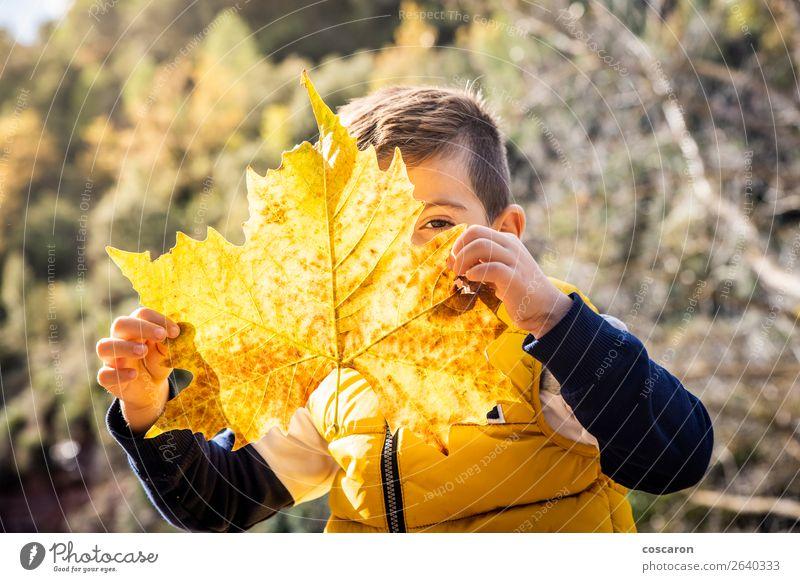 Kleines Kind mit großem Blatt im Herbst Lifestyle Freude Glück schön Gesicht Spielen Ferien & Urlaub & Reisen Winter Mensch Baby Kleinkind Junge Kindheit 1
