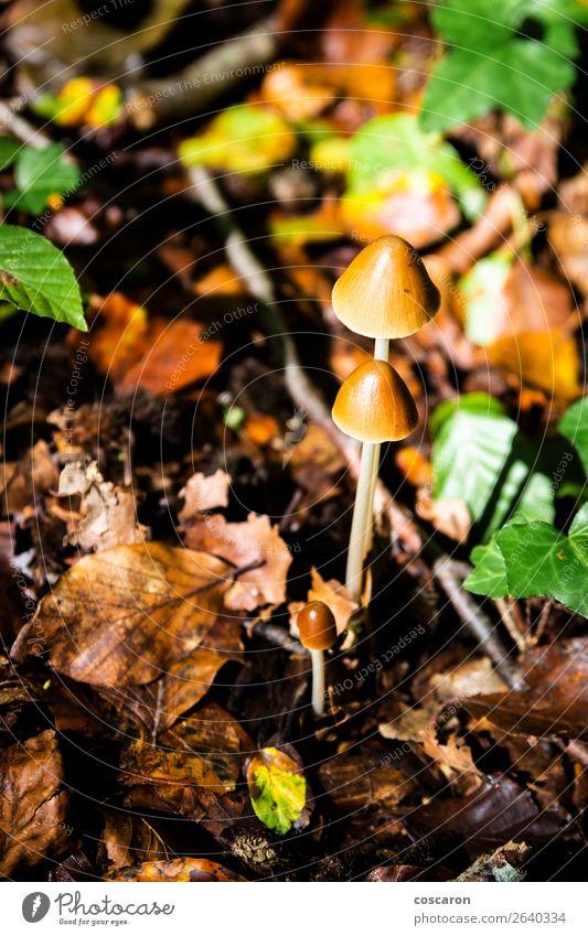 Natur alt Sommer Pflanze schön grün Landschaft weiß Blume Wald Winter dunkel Lebensmittel Herbst natürlich Wiese