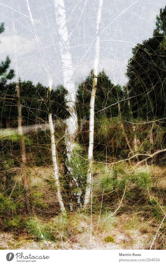 anwesend abwesend Umwelt Natur Landschaft Pflanze Baum Wald Wege & Pfade Wärme weich ästhetisch Idee Inspiration Ferne träumen Wachstum Wandel & Veränderung
