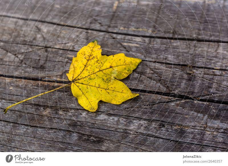 Gelbes Blatt auf dem Holzbrett Design Dekoration & Verzierung Tapete Umwelt Natur Pflanze Herbst Baum Wald Sammlung Rost alt hell natürlich braun gelb gold