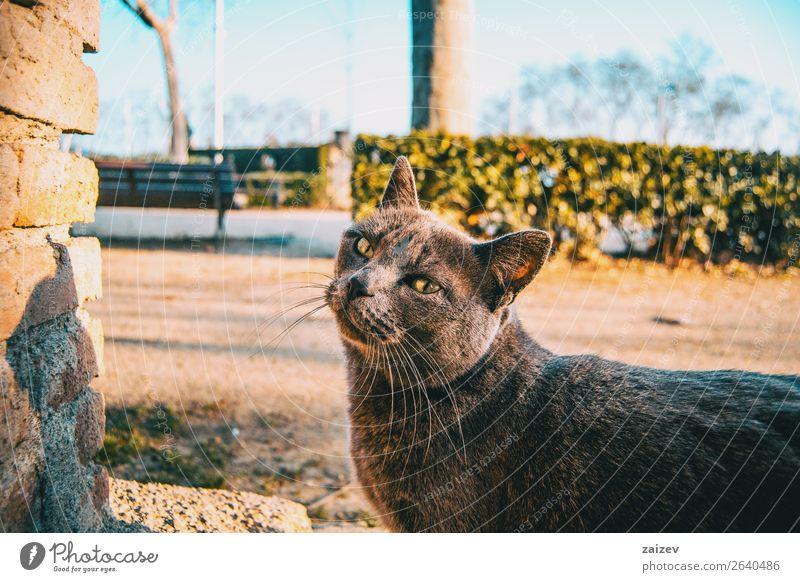 Streunende graue Katze in einem Stadtpark schön Gesicht Erholung Sommer Garten Natur Pflanze Tier Park Straße Pelzmantel Haustier genießen niedlich wild blau