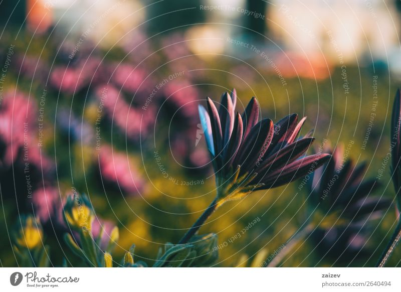 Natur Sommer Pflanze Farbe grün rot Blume Einsamkeit Blatt Blüte natürlich Garten rosa Park Spanien Beautyfotografie