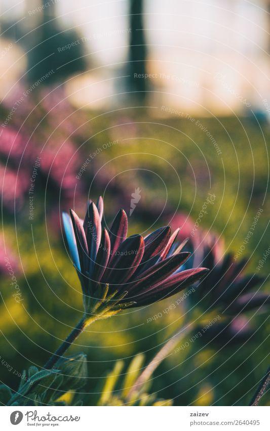 Natur Sommer Pflanze Farbe grün rot Blume Einsamkeit Blatt Blüte natürlich Wiese Garten rosa Park Feld