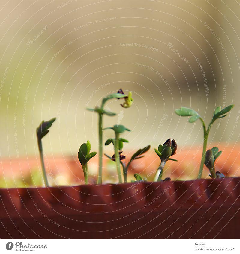 Da regt sich was im Kresseigel grün Frühling Gesundheit natürlich Lebensmittel Wachstum Beginn Ernährung Gesunde Ernährung Kräuter & Gewürze Bioprodukte positiv
