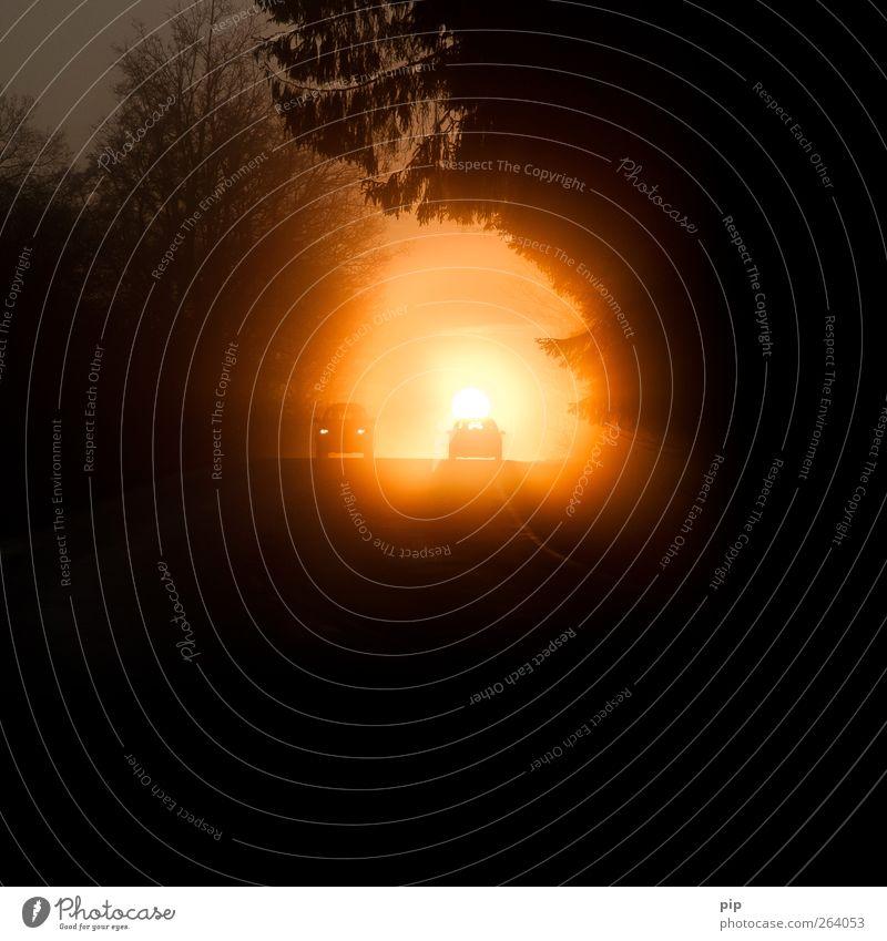 sonntagsfahrer Sonne Sonnenaufgang Sonnenuntergang Nebel Baum Verkehr Straßenverkehr Autofahren Fahrzeug PKW Ferien & Urlaub & Reisen Morgen Morgennebel