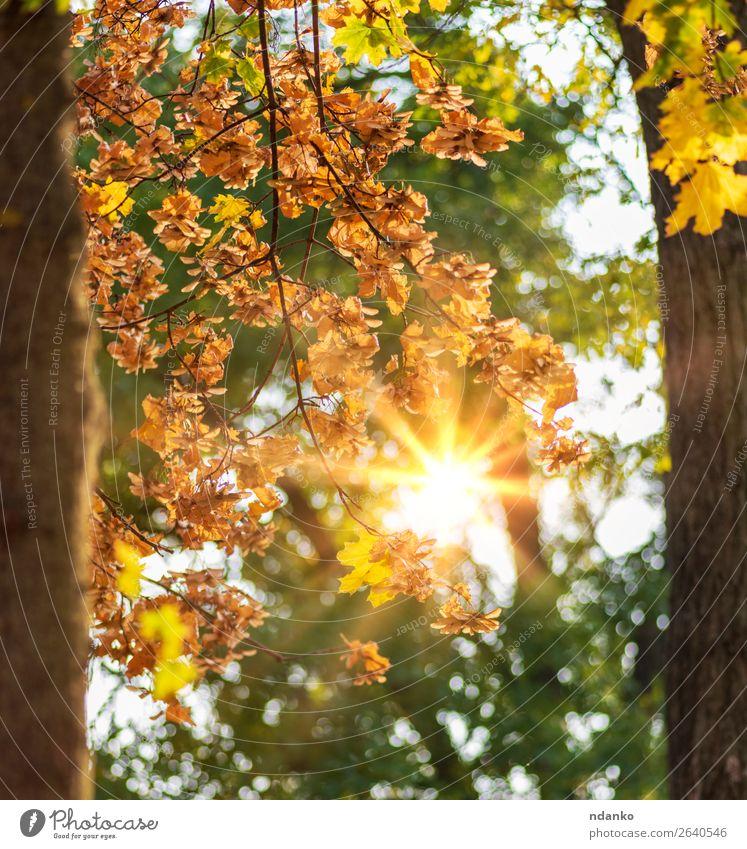 Herbststadtpark mit Bäumen und gelben Blättern Garten Umwelt Natur Landschaft Pflanze Baum Blatt Park Wald frisch hell natürlich braun gold grün Farbe Idylle