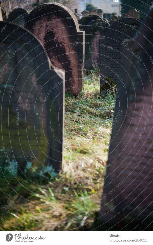 Grablicht alt Tod Gras Stein Schriftzeichen authentisch Glaube gruselig Sehenswürdigkeit Friedhof demütig Grabstein Sandstein Judentum Worms Jüdischer Friedhof