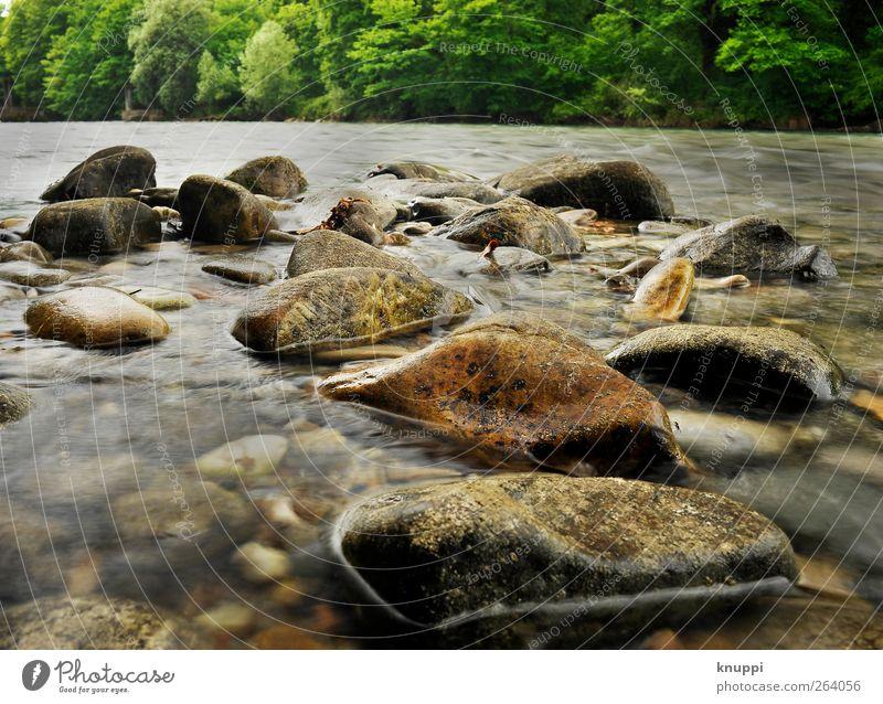 Steine im Flussbett Umwelt Natur Wasser Sonne Sonnenlicht Sommer Schönes Wetter Baum Flussufer Bach glänzend wild weich braun grau grün rot fließen Flußbett