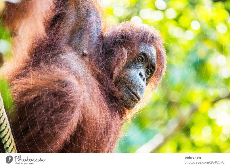 achtsamkeit   tiere beschützen besonders Blatt Baum beeindruckend Natur nachdenklich Nahaufnahme Unschärfe Tierporträt Wildnis Sarawak Menschenleer Kontrast