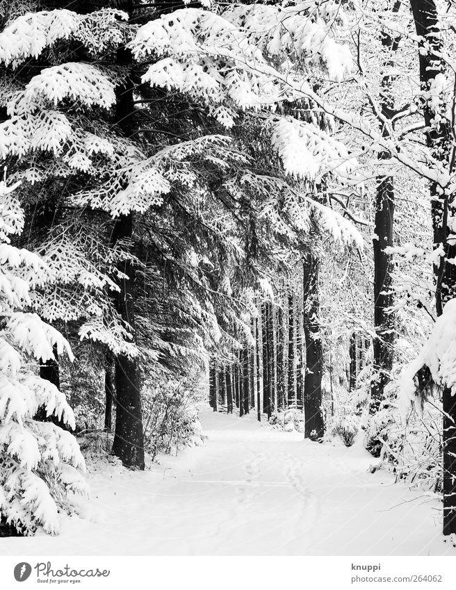 schneebedeckter Waldweg Natur weiß Baum Pflanze Sonne Winter schwarz Wald kalt Schnee Wege & Pfade Schneefall Frost Spuren Schönes Wetter Schweiz