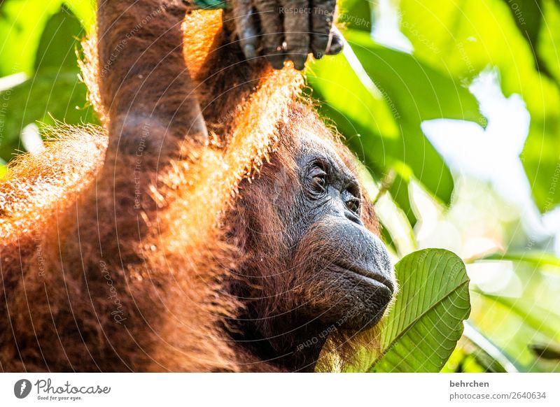 große erwartungen Ferien & Urlaub & Reisen schön Baum Tier Blatt Ferne Tourismus außergewöhnlich Freiheit Ausflug Wildtier Abenteuer fantastisch Asien Fell