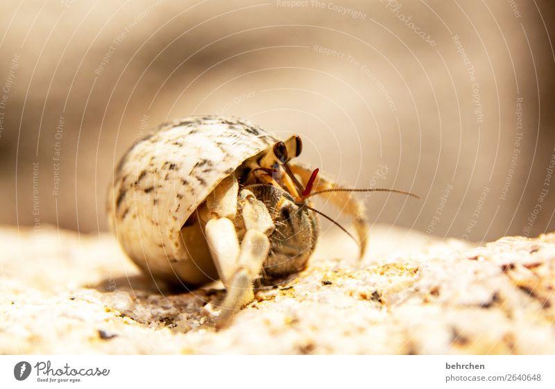 herausragend | voll aus dem häuschen Ferien & Urlaub & Reisen Natur Meer Tier Ferne Strand Auge Küste klein Tourismus außergewöhnlich Freiheit Sand Ausflug