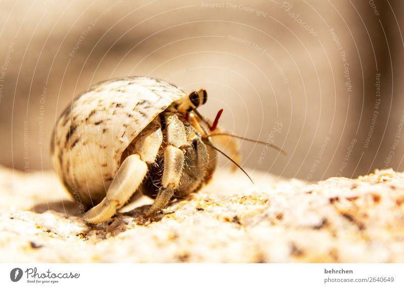 überraschung | here i am Ferien & Urlaub & Reisen Meer Tier Ferne Strand klein Tourismus außergewöhnlich Freiheit Sand Ausflug Wildtier Insel Abenteuer