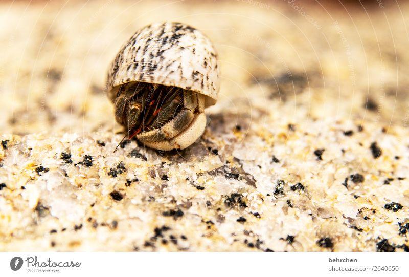 überraschung | wer steckt da wohl drin? Ferien & Urlaub & Reisen Meer Tier Ferne Strand klein Tourismus außergewöhnlich Freiheit Sand Ausflug Abenteuer