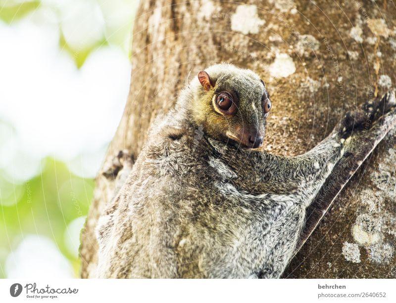 montag...echt, schon wieder??? Ferien & Urlaub & Reisen Baum Tier Ferne Auge Tourismus außergewöhnlich Freiheit Ausflug Wildtier Abenteuer fantastisch