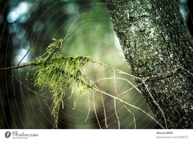 Waldgeist Natur blau grün Baum Pflanze Umwelt kalt Gefühle Luft träumen Stimmung braun Klima natürlich wandern