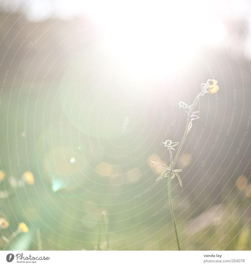 Frühling Natur Pflanze Sonne Sommer Blume Umwelt Wiese Garten Hintergrundbild Idylle zart Quadrat Oktober Mai Blendenfleck