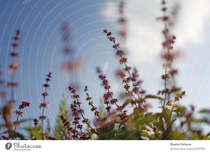 *Nordreisender* - würzige Wünsche und Grüße für Dich! grün Sommer Pflanze Garten Zufriedenheit Lebensmittel Wachstum violett genießen Blühend Kräuter & Gewürze