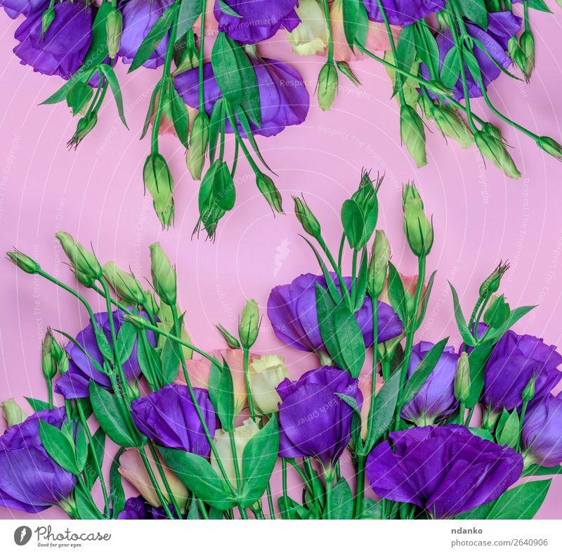 Natur Pflanze blau Farbe grün Blume Blatt Blüte natürlich Feste & Feiern Garten rosa hell Dekoration & Verzierung frisch Geburtstag