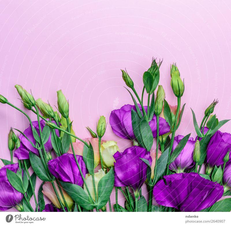 Natur Sommer Pflanze blau Farbe grün Blume Blatt Blüte natürlich Feste & Feiern rosa hell Dekoration & Verzierung frisch Geschenk