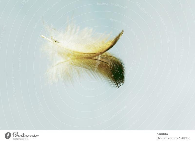 Kleine Feder, die sich in einem Spiegel spiegelt. Kunst Spiegelbild ästhetisch frisch hell schön einzigartig nah natürlich Sauberkeit gold türkis Stimmung