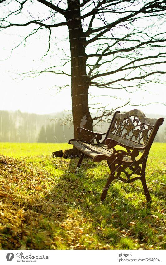 *Nordreisender*, nimm Platz! Himmel Natur grün Baum Pflanze Sonne Blatt Umwelt Landschaft Wiese Wärme Frühling Holz Gras braun Wetter