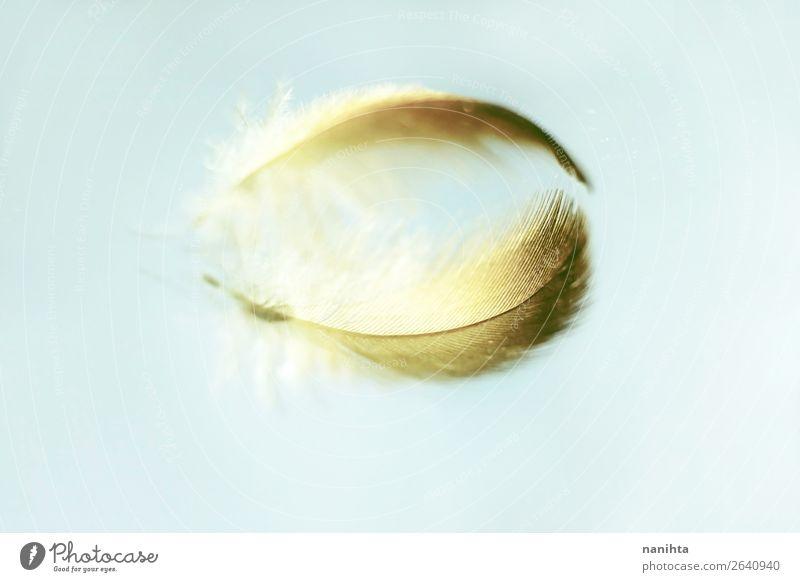 Spiegelung einer zarten Feder Design Kunst Spiegelbild Glas Kristalle ästhetisch Unendlichkeit schön einzigartig klein nah Originalität Sauberkeit weich gold