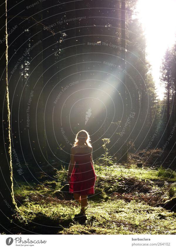 *NORDREISENDER* Glückwünsche aus dem Zauberwald Junge Frau Jugendliche Erwachsene 1 Mensch 18-30 Jahre Sonne Sonnenaufgang Sonnenuntergang Sommer Baum Wald