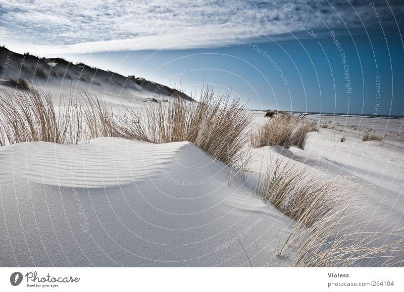 a place for *Nordreisender* Natur Landschaft Himmel Wolken Küste Strand Nordsee Insel entdecken Erholung Spiekeroog Düne Dünengras Farbfoto Außenaufnahme