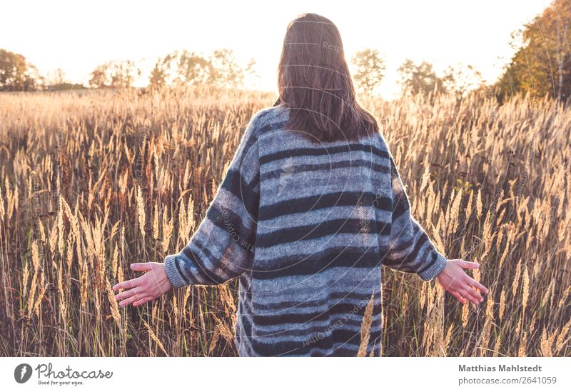 Streifzüge Mensch feminin Junge Frau Jugendliche 1 18-30 Jahre Erwachsene Natur Landschaft Sonnenlicht Herbst Schönes Wetter Feld Pullover langhaarig berühren