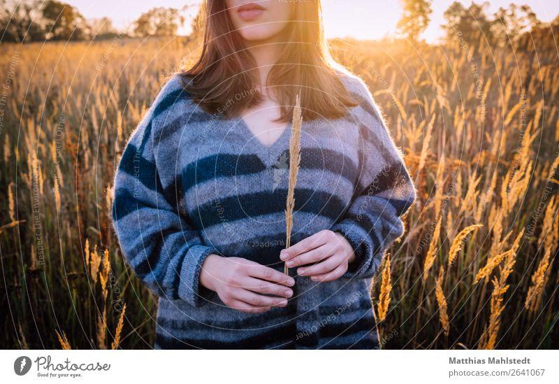 Junge Frau im Feld Mensch Natur Jugendliche blau schön Landschaft ruhig 18-30 Jahre Erwachsene Herbst natürlich feminin Gefühle Haare & Frisuren braun
