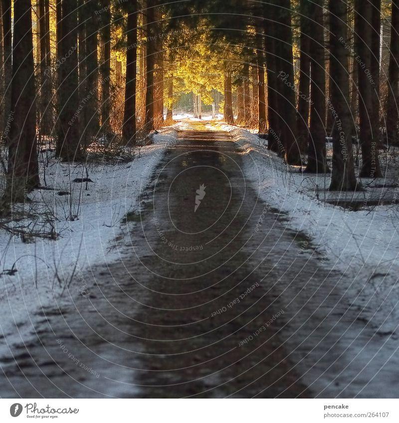 weg ins licht *Nordreisender* Wald Stimmung Geburtstag Geburtstagswunsch