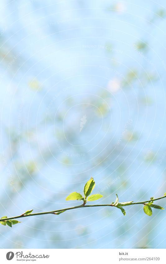 auch ein NORDREISENDER braucht mal Frühling... Himmel Natur Pflanze blau grün Blatt ruhig frisch Geburtstag Sträucher Beginn Blühend Lebensfreude Hochzeit
