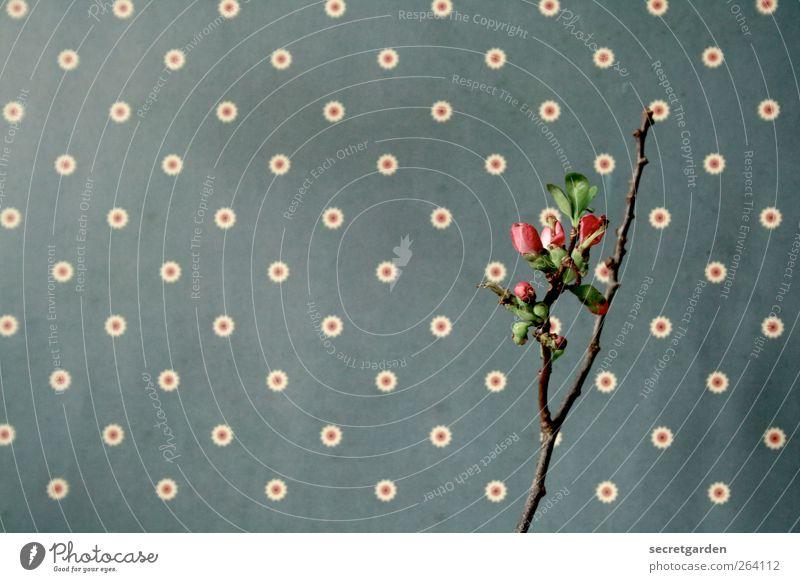 *Nordreisender* >Happy Birthday! Natur blau weiß grün Pflanze Einsamkeit Holz Frühling rosa Wachstum Dekoration & Verzierung Sträucher retro Kitsch Punkt zart
