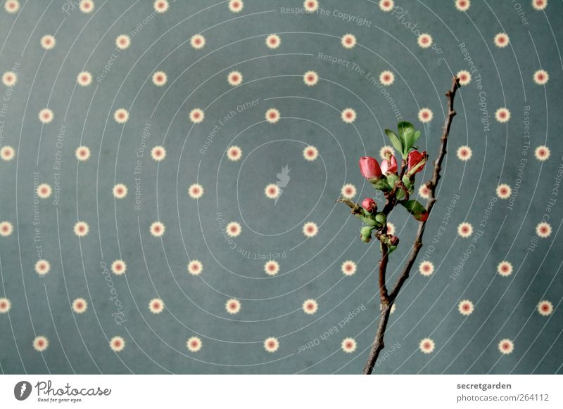 *Nordreisender* >Happy Birthday! Natur Frühling Pflanze Sträucher Grünpflanze Nutzpflanze Dekoration & Verzierung Kitsch Krimskrams Holz Blühend Wachstum retro