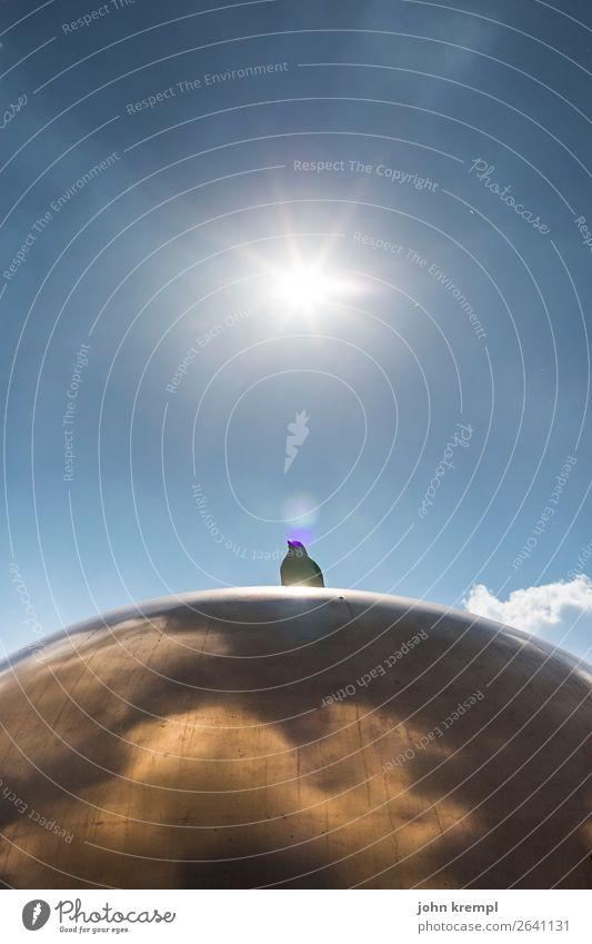 Rom VI - Heiliger Geist Himmel blau Sonne Tier ruhig Religion & Glaube Tourismus gold glänzend sitzen groß Italien Schutz Bauwerk Denkmal