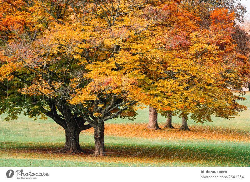 Herbstzauber Park Kraft schön Herbstlaub Herbstfärbung Baum Baumstamm herbstlich Herbstwetter prächtig Farbfoto Außenaufnahme Tag Zentralperspektive