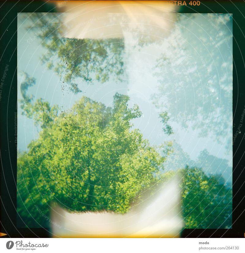 Burn! Natur Landschaft Himmel Sommer Schönes Wetter Baum Blatt Park Wald Stadtzentrum verblüht Wachstum Unendlichkeit natürlich Wärme blau grün Glück