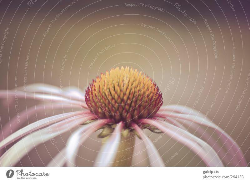 Blumen für den *Nordreisenden* Natur Stadt schön Pflanze Blatt Umwelt Blüte braun rosa wild Wachstum weich Schönes Wetter Dorf Lebensfreude