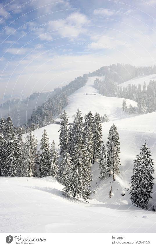 Winter auf der Rigi Himmel Natur blau weiß Baum Pflanze Sonne Winter Wolken Wald Umwelt Landschaft kalt Schnee Berge u. Gebirge Eis