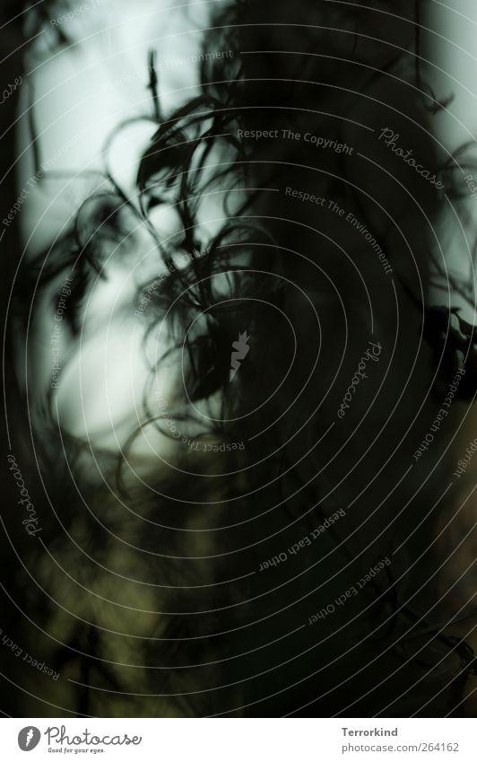 Herzlichen Glückwunsch. Nordreisender Natur weiß Pflanze Sommer schwarz Leben Garten Wachstum Zaun Holzbrett Spirale Gartenzaun Schlangenlinie