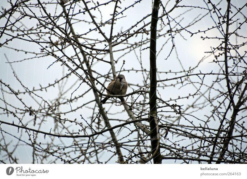 *Nordreisender* Die Spatzen pfeifens von den Dächern! Himmel Natur Baum Pflanze Winter Tier Wolken Frühling Vogel Wildtier sitzen Sträucher Schönes Wetter
