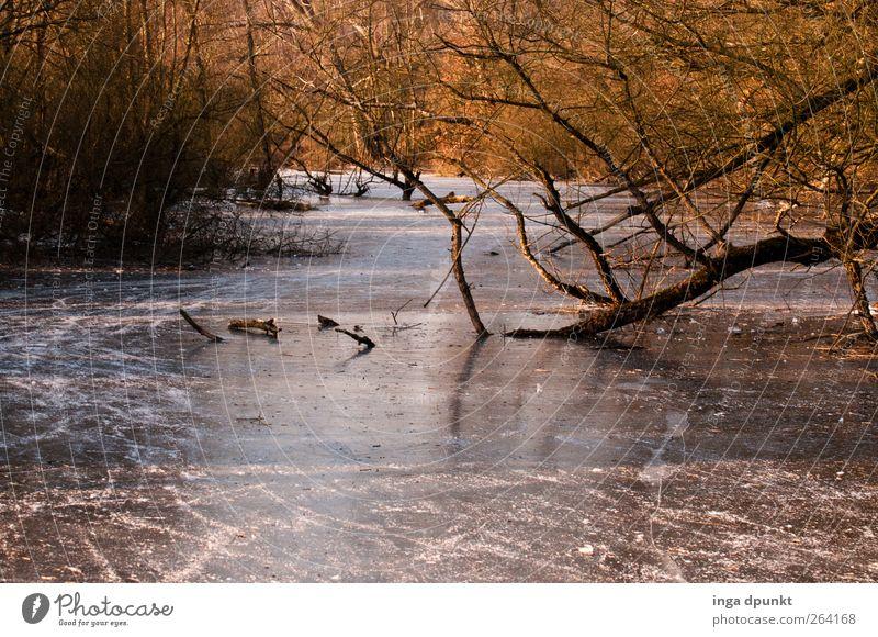 Nordreisender Fluss- Happy Birthday! Umwelt Natur Landschaft Pflanze Urelemente Winter Klima Eis Frost Baum Flussufer kalt Umweltschutz Farbfoto Außenaufnahme