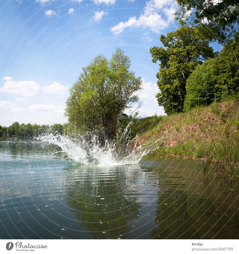 Platsch Natur Wasser Wassertropfen Himmel Wolken Sommer Schönes Wetter Baum Seeufer Bewegung authentisch einzigartig nass blau gelb grün weiß Freude Leben